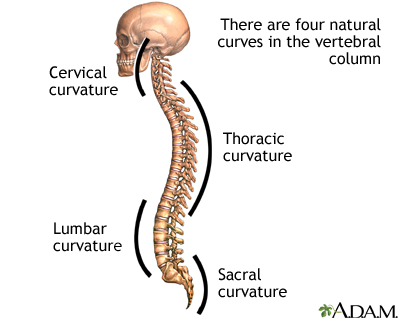 Spinal curves