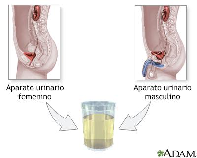 Volumen urinario en 24 horas