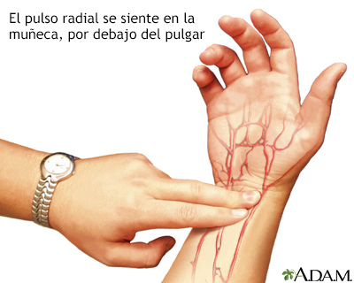 Pulso radial
